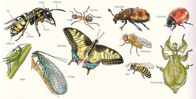 ms access - download file access insetti
